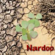 Nardoo